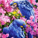 castorland-puzzel-1000-stuks-blauwe-papegaai-102242