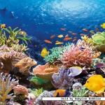 castorland-puzzel-1000-stuks-koraalrif-101511