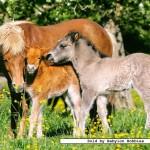 castorland-puzzel-120-stuks-pony-s-in-de-weide-12619