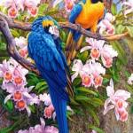 castorland-puzzel-1500-stuks-parrots-and-orchids-150861