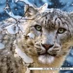 castorland-puzzel-1500-stuks-snow-leopard-150823