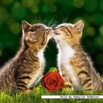 castorland-puzzel-500-stuks-2-lieve-kittens-51625