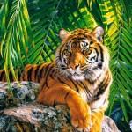 castorland-puzzel-500-stuks-mooie-tijgerin-51649