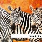 ravensburger-puzzel-2000-stuks-zebra-parade-166954