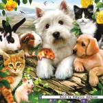 ravensburger-puzzel-300-stuks-happy-animal-buddies-131600