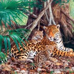 castorland-puzzel-3000-stuks-jaguars-in-de-jungle-300280