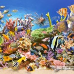 castorland-puzzel-4000-stuks-onderwaterwereld-400089