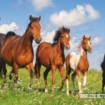 castorland-puzzel-4000-stuks-paardenfamilie-400034