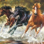 castorland-puzzel-500-stuks-splash-51823