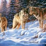 castorland-puzzel-500-stuks-wolven-51793