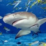 educa-puzzel-500-stuks-haai-15972
