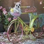 educa-puzzel-500-stuks-hond-op-fiets-15964