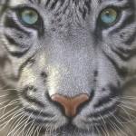 educa-puzzel-500-stuks-witte-tijger-15971