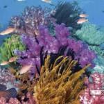 heye-puzzel-2000-stuks-alexander-von-humboldt-koraalrif-29402
