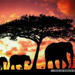 ravensburger-puzzel-500-stuks-olifanten-bij-zonsondergang-142477