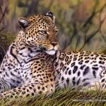 schmidt-puzzel-1000-stuks-koning-van-de-savanne-58160
