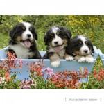 schmidt-puzzel-1000-stuks-puppies-58175