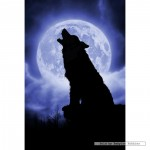 schmidt-puzzel-500-stuks-julie-fain-wolf-in-volle-maanlicht-59514